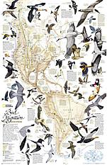 Fugl vandretur Amerika